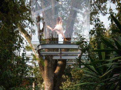 خانه درختی شیشه ای
